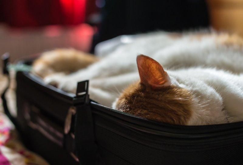 Best Hostels for cat lovers