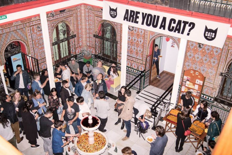 Cat's Chil out hotel for cat lovers