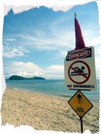 Palm Cove - Nicht schwimmen!