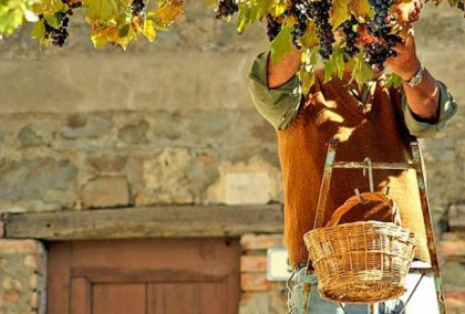Reise durch Italien: auf der Suche nach dem guten Wein (big)