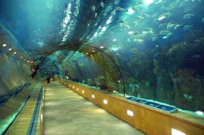 Oceanogràfic, Valencia (big)