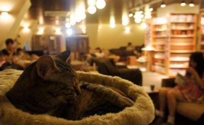 Il Neko Cafe