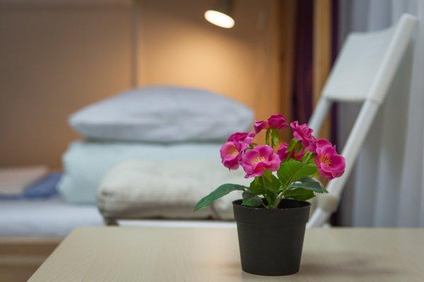 Hostel Vishnya